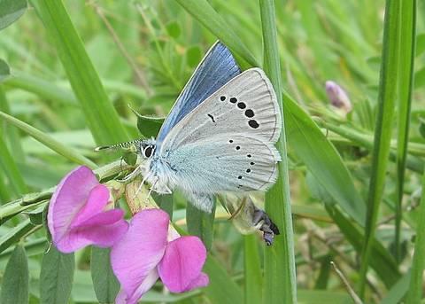 Les papillons du Rhône